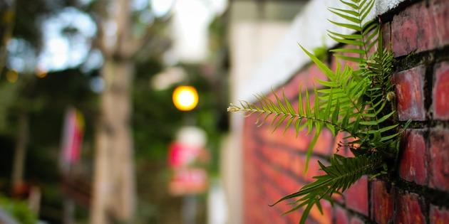 冬季綻放奇蹟之櫻 - OA Wu's Blog