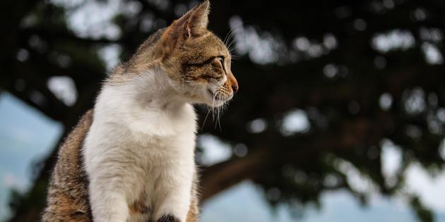 愛睡覺的貓 - OA Wu's Blog
